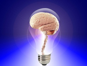 The creative brain.  Squishy and encased in glass.